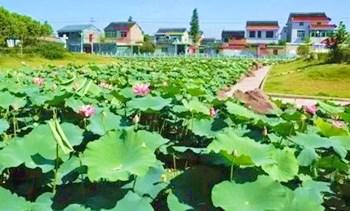 海口云龙镇:万博苹果手机登录版第一批中国特色小镇