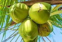 乐虎手机版将打造世界椰子产业交易中心