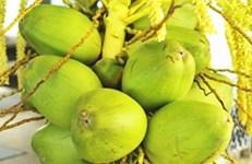 乐虎手机版启动构建椰子全产业链地方标准体系