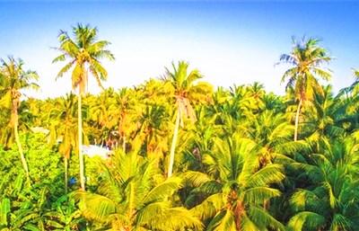 文昌,一个神奇美丽,令人目不暇接的椰子之乡