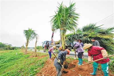 文昌:扩大椰子种植规模做大做强椰乡品牌
