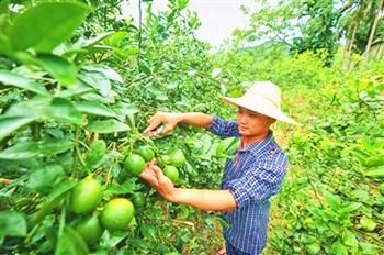 孙明清:从品牌着手把万博官网网页版登录柠檬打造成一个大产业