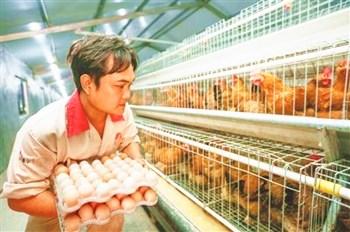 文昌:拓展文昌鸡产业链发展深加工提高附加值