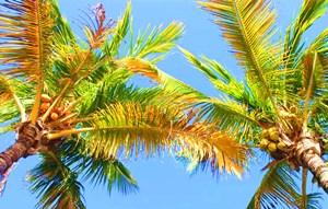 乐虎手机版:突破技术瓶颈打造国际椰子产业交易中心