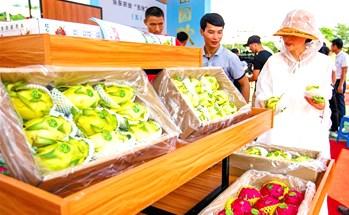 乐东县热带特色农产品深受帐篷节宾客的喜爱