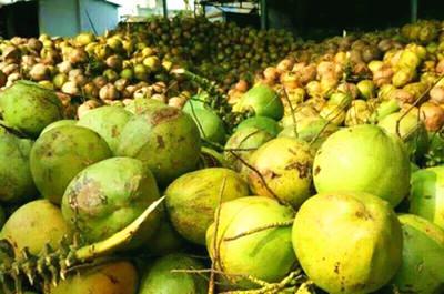 突破瓶颈 文昌做大做强椰子产业源头