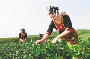 海垦有机茶全方位打造生态有机茶园
