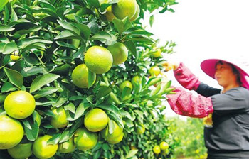 澄迈:大力发展热带富硒特色农业