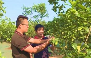"""王俏:打造""""世界热带水果之窗""""带动农民致富"""