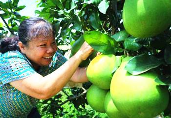 屯昌县将绿水青山变成群众增收致富的金山银山