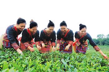 白沙:以共享农庄建设推进白沙一二三产业融合发展