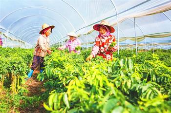 五指山:科技助农推动产业越来越兴旺