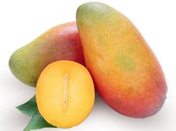 海垦神泉芒果:纤维少、味甜芳香、质地腻滑