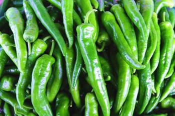 海垦辣椒:产量高,果型诱人,倍受客商欢迎