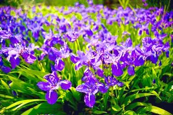 海垦兰花:具有质朴文静、淡雅高洁的气质