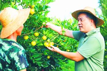 澄迈发展山柚油产业,延伸产业链