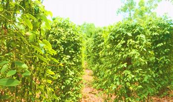 Maxbet万博特色农产品促进农业增效 农民增收
