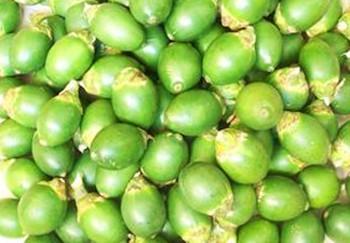陵水槟榔:肉质厚,纤维细小,味道爽口醇香