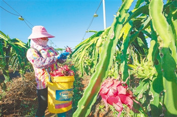 """红明农场公司助力万博体育matext登陆优质农副产品找到高端""""买家"""""""