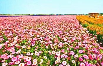 陈潇:努力打造万博官网手机版网页版登录热带特色高效农业王牌