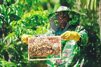 儋州番新村:发动村民大力发展种植养殖产业