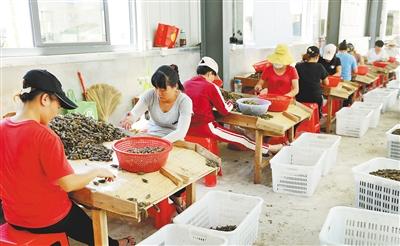澄迈文儒镇建槟榔环保加工厂槟榔市场价格看好