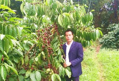 白沙陨石岭咖啡产业越做越大种植规模达5000亩以上