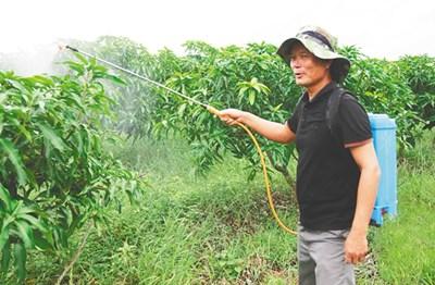 昌江村民符祥文放牛、养鱼、种芒果,唱响致富田园牧歌