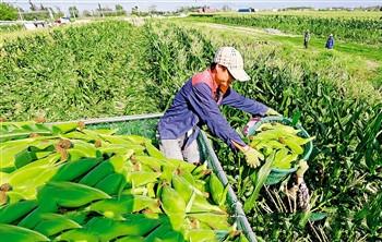"""东方:产业升级围绕""""三化""""推动农业提质增效"""