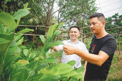 文昌:小额贷款成农民致富及时雨 乡村产业发展加油站